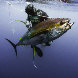 Andrea De Camilli in Ascension Island with a big Yellowfin Tuna